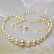 Antique necklace made of salt-water cultured pearls arranged by size, 3 to 8 mm in diameter, 18 kt gold.
