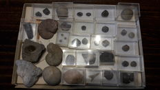 Lot of 27 fossils