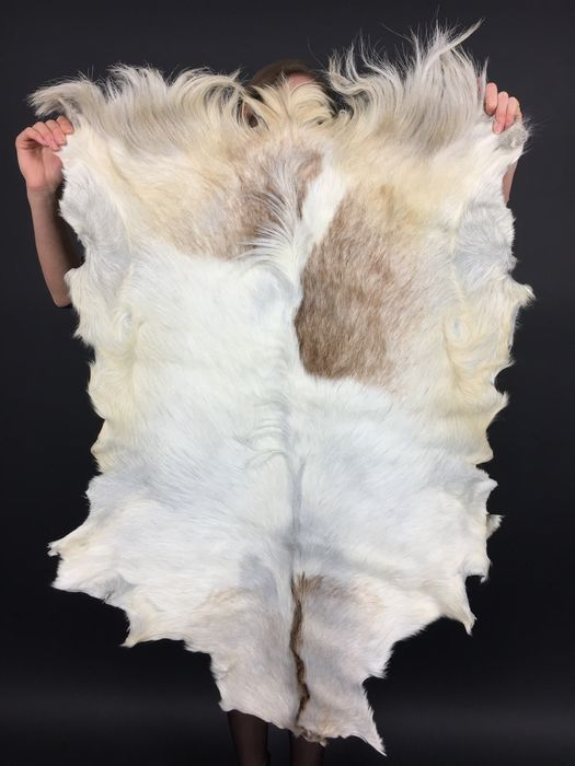 Large long-haired Goatskin rug - cream, white and brown - 114 x 78cm