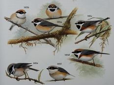 S. Harrap - Tits, Nuthatches & Treecreepers & Steve Madge Crows and Jays & Jon Curson - New World Warblers - 3 volumes - 1994/1996