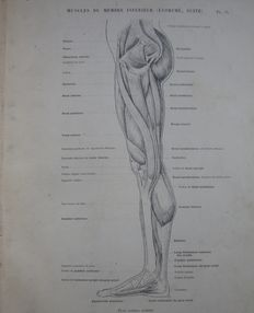 Dr Paul Richer - Anatomie Artistique - 2 volumes - 1890