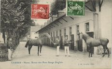 Horses over 100 x-postcards with horses-Photographed, drawn-military-1900/1940