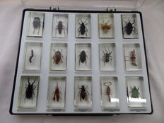 25 Insects-cast In Acrylic-luxury Storage Boxes