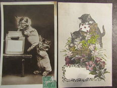 Nice selection of 28 postcards on cats