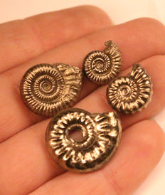 Group of 4 mixed species - Crucilobiceras x 2 , Promicroceras, Tropidoceras - Iron Pyrite Ammonite fossils 12 - 14mm