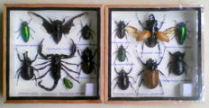 Interesting pair of Insect Display Cases - various species including Scorpion - 15 x 15cm  (2)