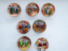 Set of Madagascar Jewel Beetles in resin cabochons - paperweights -  50 mm  (7)