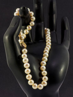 Akoya cultivated pearl necklace white cream pearls Ø 6.2 - 6.8 mm, 585 gold clasp, new