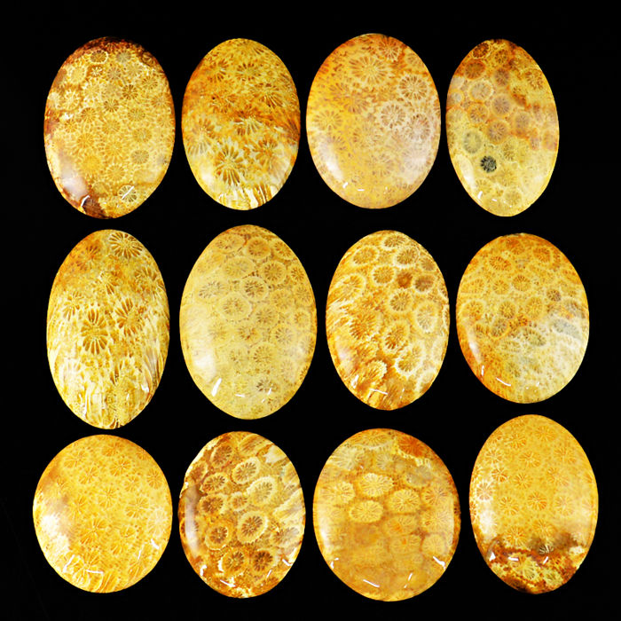 Large Coral Fossil Polished Cabs lot -  710 ct - (12pcs)