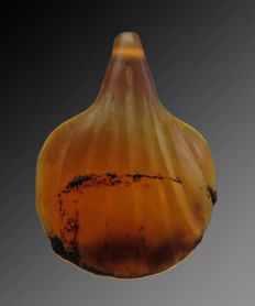 Egyptian shell amulet of carnelian - 14 mm