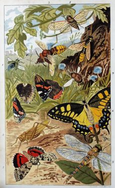 Rev. J. G. Wood - Insects at Home - 1883