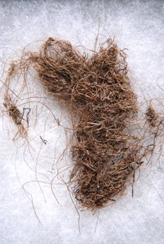 Mammoth hair - Mammuthus primigenius - 90 x 80 mm