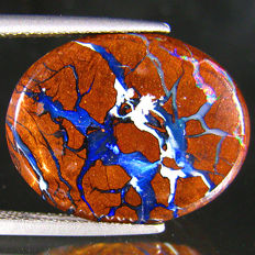 Stunning  Blue Color Play  Australian Boulder  Opal   - 12.33 Ct