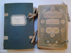 Lot of 2 herbaria, including plants from 1913