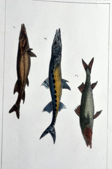 "8 zoological pages by Paul Louis Oudart (1796–1850) from ""Oeuvres du comte de Lacépède"" 1830-1833"