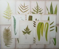 13 botanical prints by an unknown artist - Various plants - 19th century