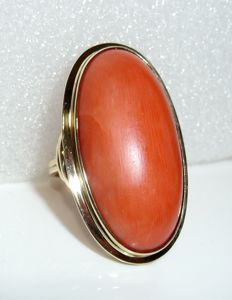 Ring 14 K / 585 gold with an extremely large Mediterranean coral of 30 ct. 32.5 x 18 mm RG 54-55