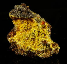 Stunning yellow Mimetite crystals on Limonite matrix - Mexico - 4,0 x 3,0 x 2.2 cm - 13,8 gm