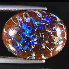 Fabulous Blue Color Play  Australian Boulder  Opal   - 9.06 Ct