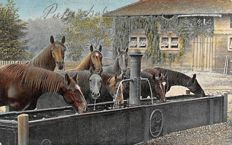 110 x theme cards Horses, including many horses with foals and beautiful old cards.