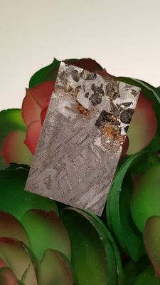 Seymchan Pallasite slice with clear olivines - 40 x 35 x 3mm. - 23gm