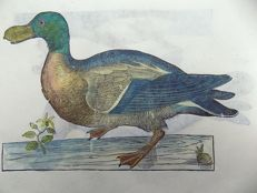 2 ornithological prints on 1 leaf - Ulisse Aldrovandi (1522 – 1605) - Birds, Waterbirds: Mallard Ducks - 1637
