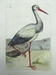 Pierre Remi Willemet (1735 - 1807) - Ornithology - Stork - Master engraving - 1794