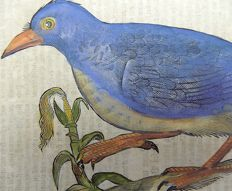 Conrad Gesner (1516-1565) - One leaf with a large woodcut - Ornithology, Birds: European Roller [ Coracias garrulus ] - 1669