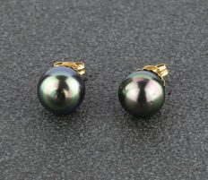 18 kt/750 yellow gold - Earrings - 10.50 mm (approx) Tahitian Pearls