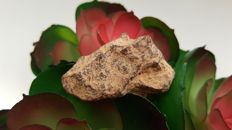 Metallic meteorite classified IIAB.  -Agoudal (Imilchil) - 32.2 g