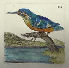 Pierre Remi Willemet (1735 - 1807) - Ornithology - Master engraving - Birds: Kingfisher - 1794