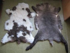 Fine pair of unusual, natural Sheep Skins - Ovis aries - 120 x 65cm and 9 x 60cm  (2)