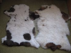 Fine pair two unusual natural Jacob Sheep skin - Ovis aries - 101 x 66cm / 92X55 cm (2)
