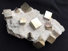 Cubic pyrite crystals on matrix - 19x13x6 cm - 1450 g