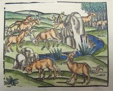 Gruninger Master; Virgil - Crespin Edition; The Georgics. Agriculture: Herd of Cattle Cows; hand coloured - 1529