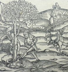 Gruninger Master; Virgil - Crespin Edition;The Georgics. Agriculture, Plough, Dendrology, Vine, Wine, Husbandry - 1529