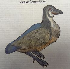 Conrad Gesner (1516-1565) - One leaf ornithological woodcut - Waterbirds: Goose, Tree Goose - 1669