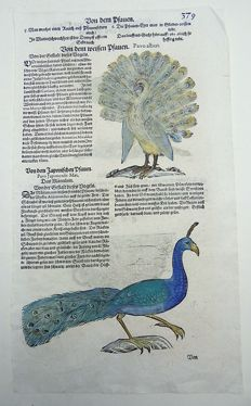 Conrad Gesner (1516-1565) - One leaf ornithological woodcut - Peacocks, Peahen - 1669
