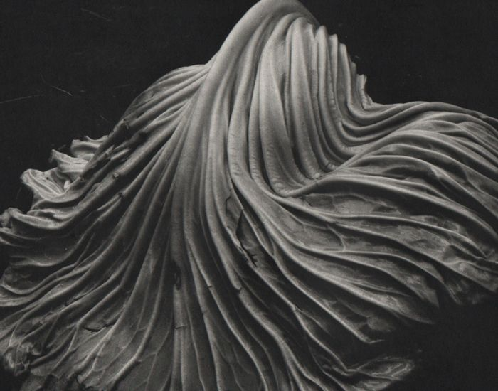 Edward Weston (1886-1958) - Cabbage Leaf