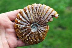 Carved ammonite entirely in calcite - superb condition -  105 x 87 mm - 206 g