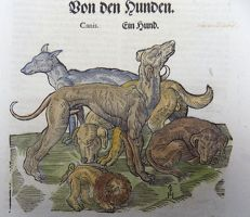 One leaf with 2 wood blocks - Conrad Gesner - Mammals: Domestic Dogs, Hounds, Canis, Stag - 1669