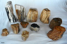 Trunks of Petrified wood - 50-170 mm - 8 kg (11)