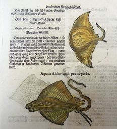 Conrad Gesner (1516 - 1565); folio leaf with 5 large woodcuts - Ichthyology, Fish: Rays, Stingrays, Raia, Eagle Ray - 1669