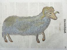 One leaf with wood block - Conrad Gesner - Mammal: Sheep, Ram, Ungulate [ Artiodactyla ] - 1669