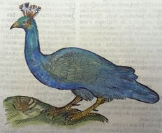 Conrad Gesner (1516 - 1565); folio leaf with large woodcut - Bird: Hen, Peahen, Peacock - 1669