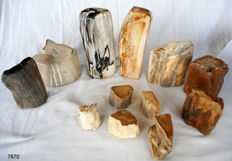 12 trunks of mineralised petrified wood - 52 to 205 mm - 9.8 kg (11)