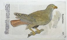 One leaf with 2 ornithological wood blocks - Conrad Gesner - Birds: Bird of Prey Kite, Mylvus - 1669