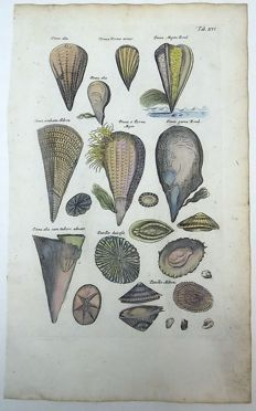 Sealife - Matthäus Merian (1621 – 1687) - Aquatic Shells: Sea Shell, Mollusc, Pen, Pinna, Patellae - 1657
