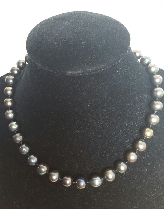 Silver 925 - Fresh water cultured black colour pearls - Length: 47 cm.