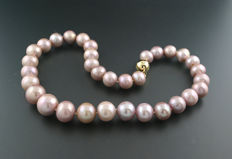 Splendid cultivated pearl necklace of 12-16mm natural light pink, 585 yellow gold ---no reserve price---